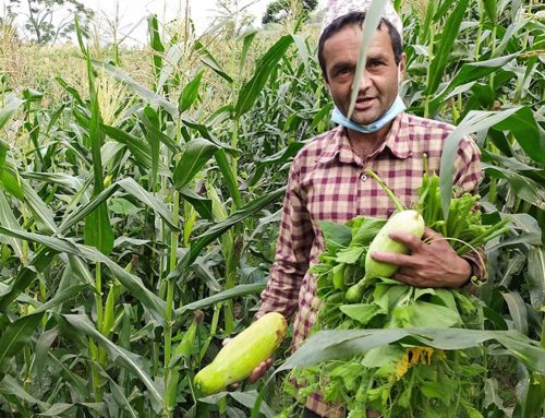 Effects of the Lockdown on Nepali Agriculture