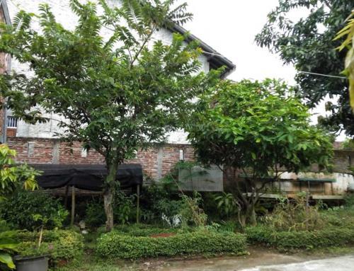 Peace Place Training Center Plants Fruit Trees